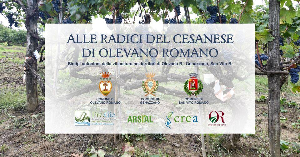 https://www.comune.olevanoromano.rm.it/immagini_news/10-02-2021/1612962683-419-.jpg