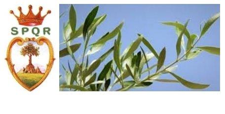 https://www.comune.olevanoromano.rm.it/resizer/resize.php?url=https://www.comune.olevanoromano.rm.it/immagini_news/10-04-2020/1586510112-230-.jpg&size=691x350c0